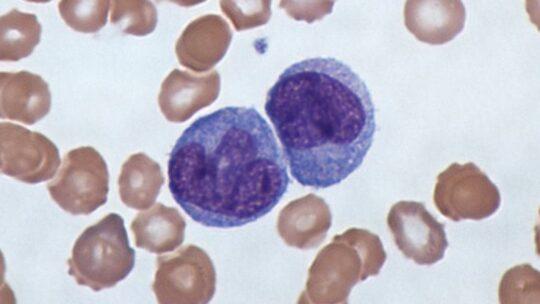 Coronavirus, tutti i giochi di prestigio con cui beffa il sistema immunitario